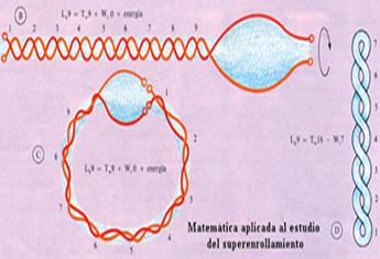 Enrollamiento de ADN